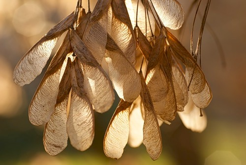Поделки из семян деревьев