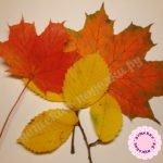 Как высушить листья для поделок и аппликаций