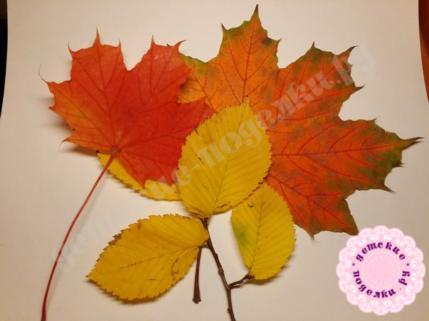 Как высушить листья для поделок