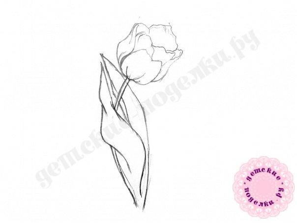 Как нарисовать тюльпан карандашом поэтапно для начинающих